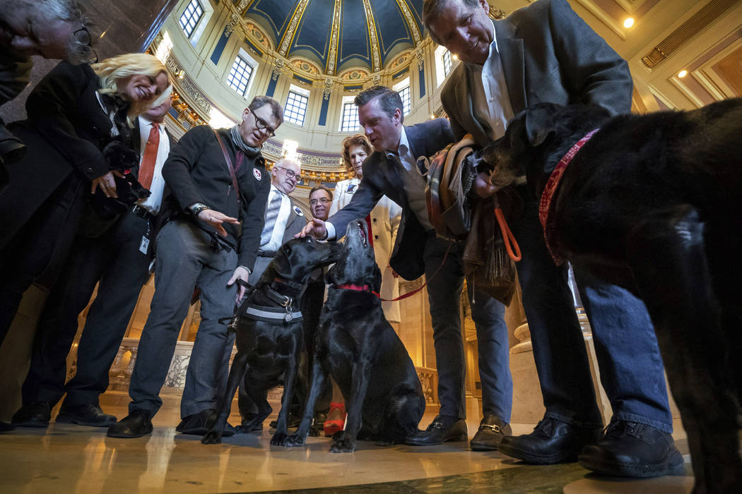 Tom Coleman, fourth left, of Pawsitivity Service Dogs, with Daniel, Minority Leader Kurt Daudt, R-Crown, second right, with his black lab Lucy and Ron Schara, right, with Raven mingle after Republ ...