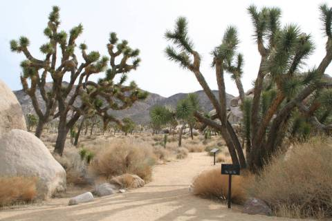 The park boasts close to 200 miles of hiking trails, including the Cap Rock Trail, an easy 0.4 ...