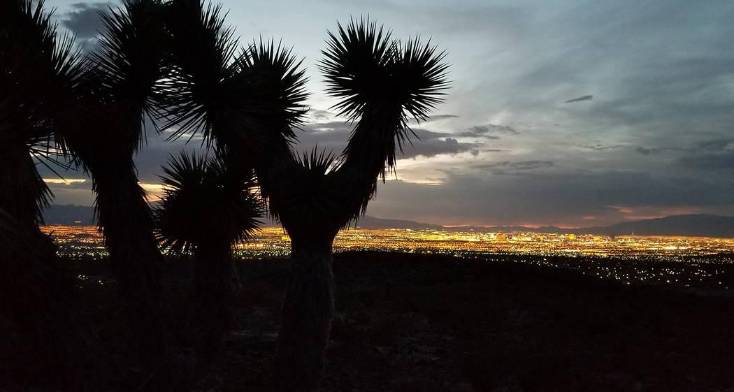 Joshua tree stands above millions of Las Vegas Valley lights. (Natalie Burt)