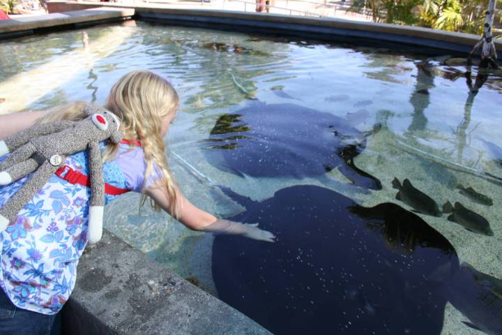 Children can have a hands-on experience at the Ray Touch Pool at the Aquarium of the Pacific. ( ...