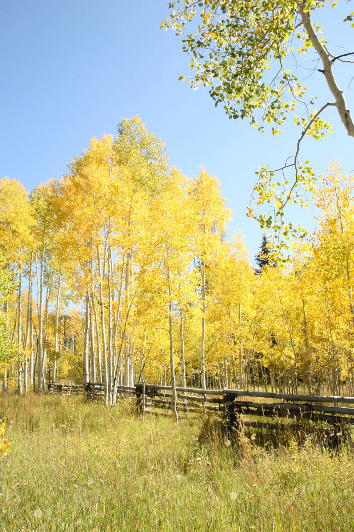 The fall foliage season has started in Southern Utah and, depending where you go, will run into ...