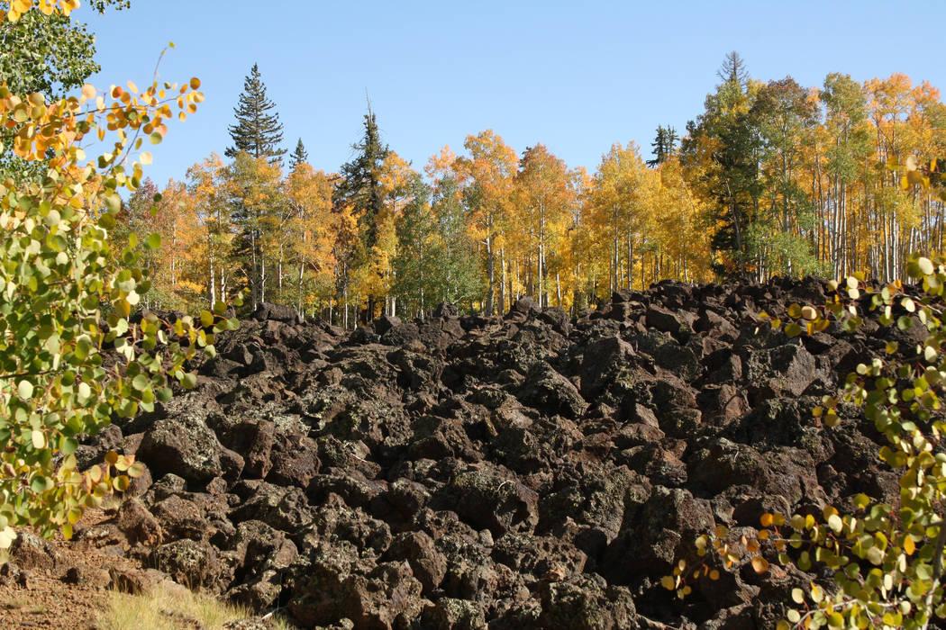 Aspens flank an ancient lava bed near Navajo Lake on the Markagunt Plateau. (Deborah Wall/Las V ...