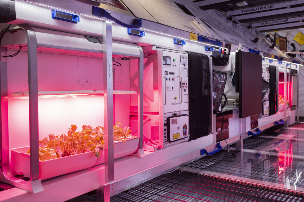 Fresh vegetable gardens on the B330 Mars Transporter Testing Unit at Bigelow Aerospace in North ...