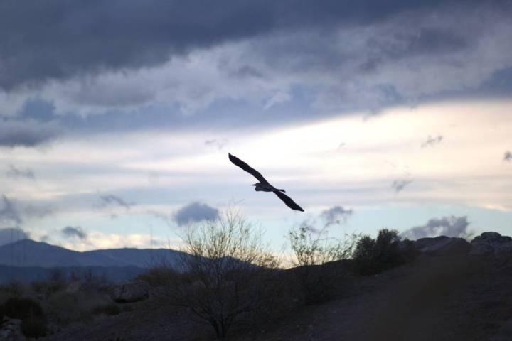 Wetlands Loop, a 14-mile bike path that runs along both banks of the Las Vegas Wash, offers mou ...