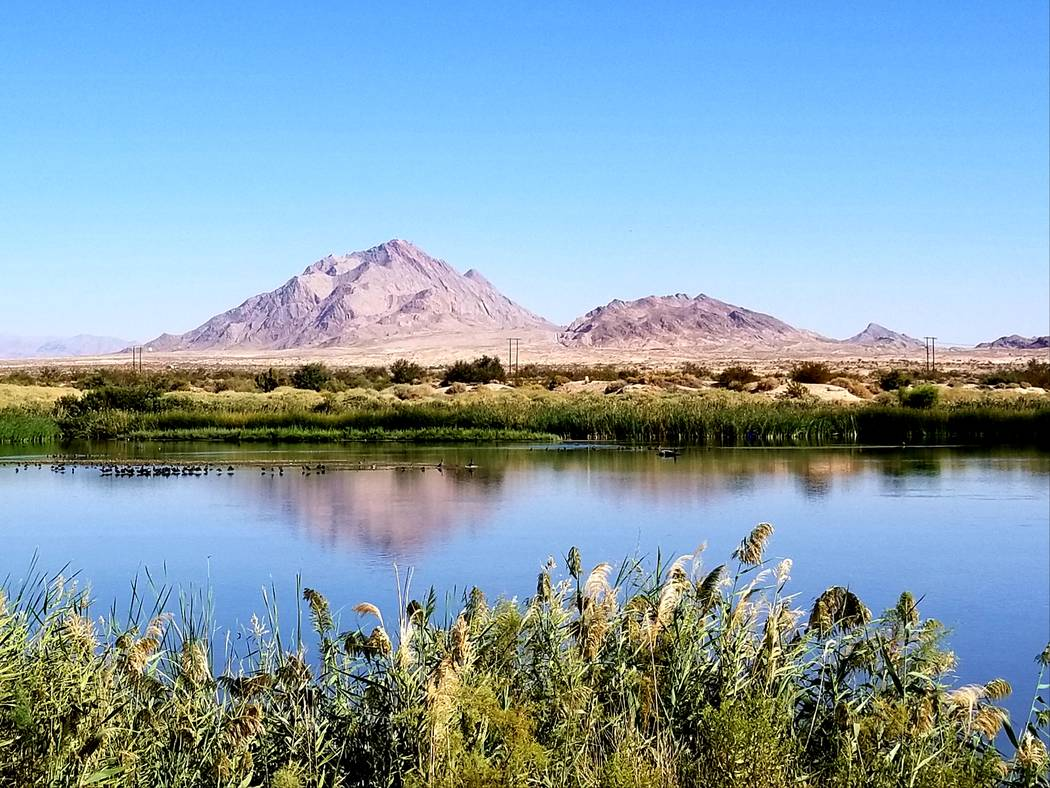 Mountains frame the horizon at Clark County Wetlands Park. (Natalie Burt)