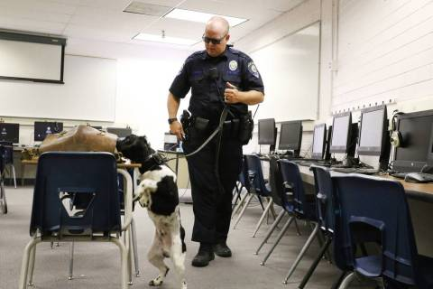 Clark County School District K-9 officer Joe Cordsen watches as his dog Jack tries to locate hi ...
