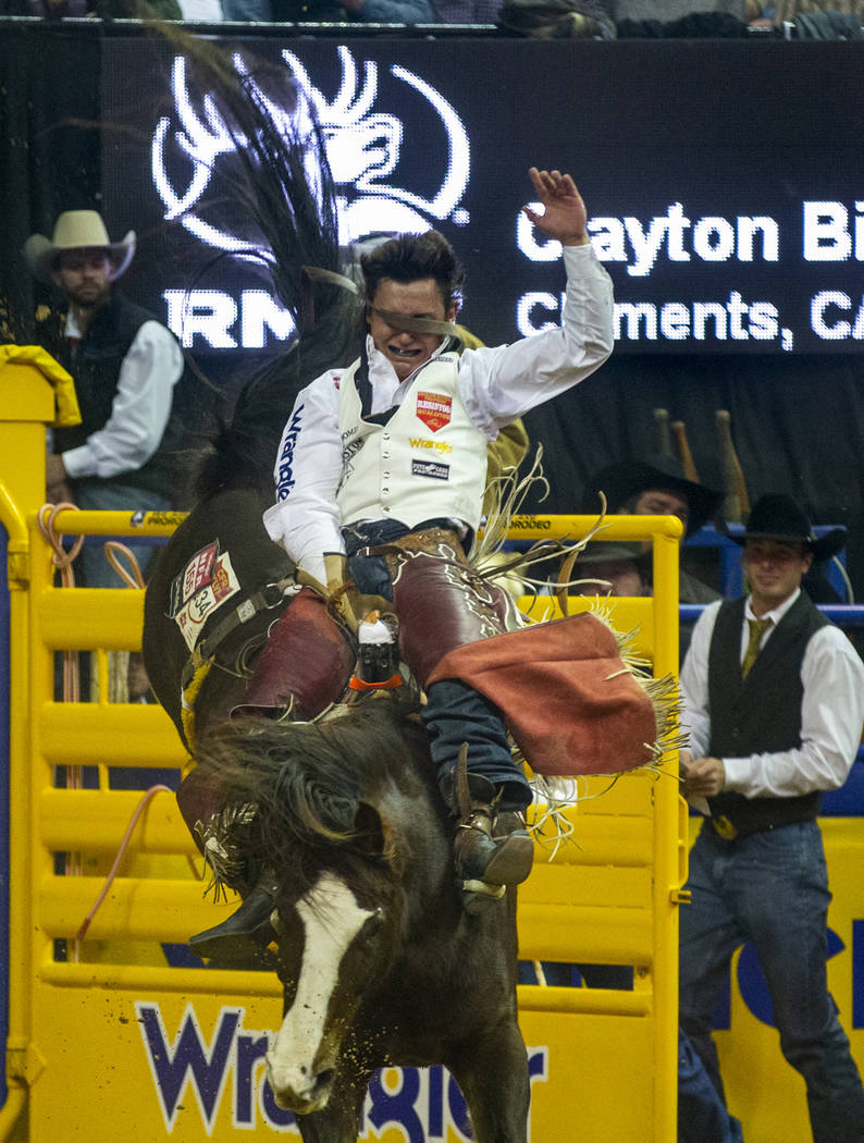 Clayton Biglow of Clements, Calif., gets a strap to the face while riding Stevie Knicks to a fi ...