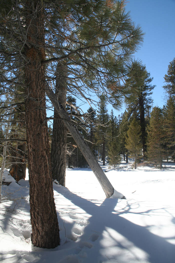 Visitors who take the Palm Springs Arial Tramway in winter usually are pleasantly surprised to ...