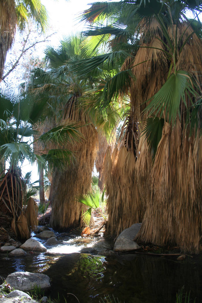 One of the best places to hike near Palm Springs is at the Indian Canyons, managed by the Agua ...
