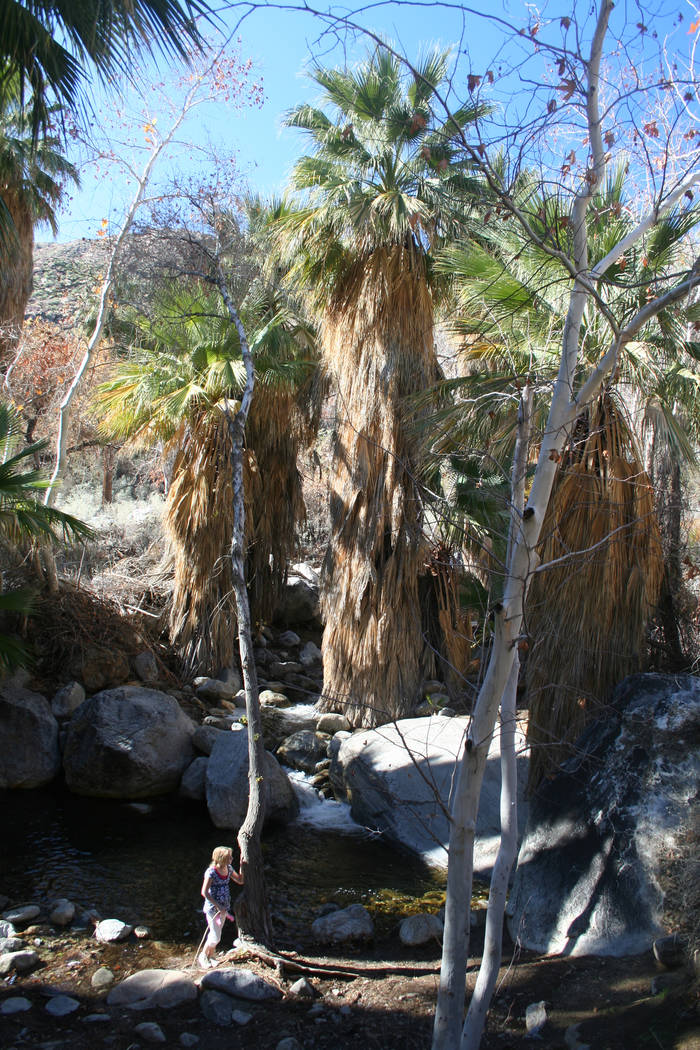 Hikers can take one of the many spur trails in Andreas Canyon to access Andreas Creek. (Deborah ...