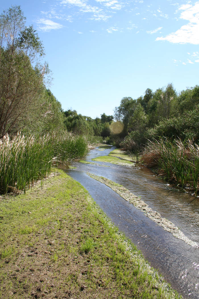 Hiking and birding are two of the most popular activities at the Hassayampa River Preserve. (De ...