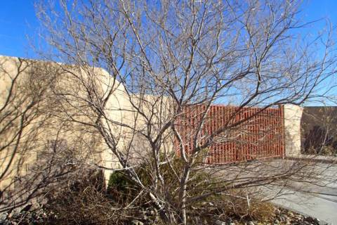 Desert willow can look shaggy during the winter because of the brown seed pods that hang from t ...