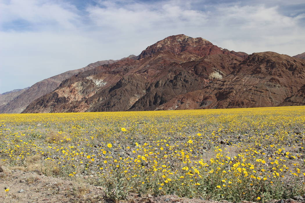 """There will probably not be a """"Super bloom"""" this year, like in 2016, but there will always b ..."""