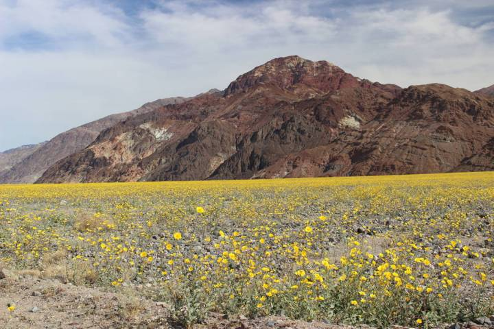 "There will probably not be a ""Super bloom"" this year, like in 2016, but there will always b ..."