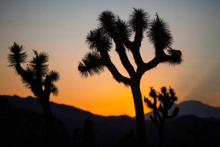 The sun sets at Joshua Tree National Park outside of Twentynine Palms, Calif. on Thursday, Sept ...