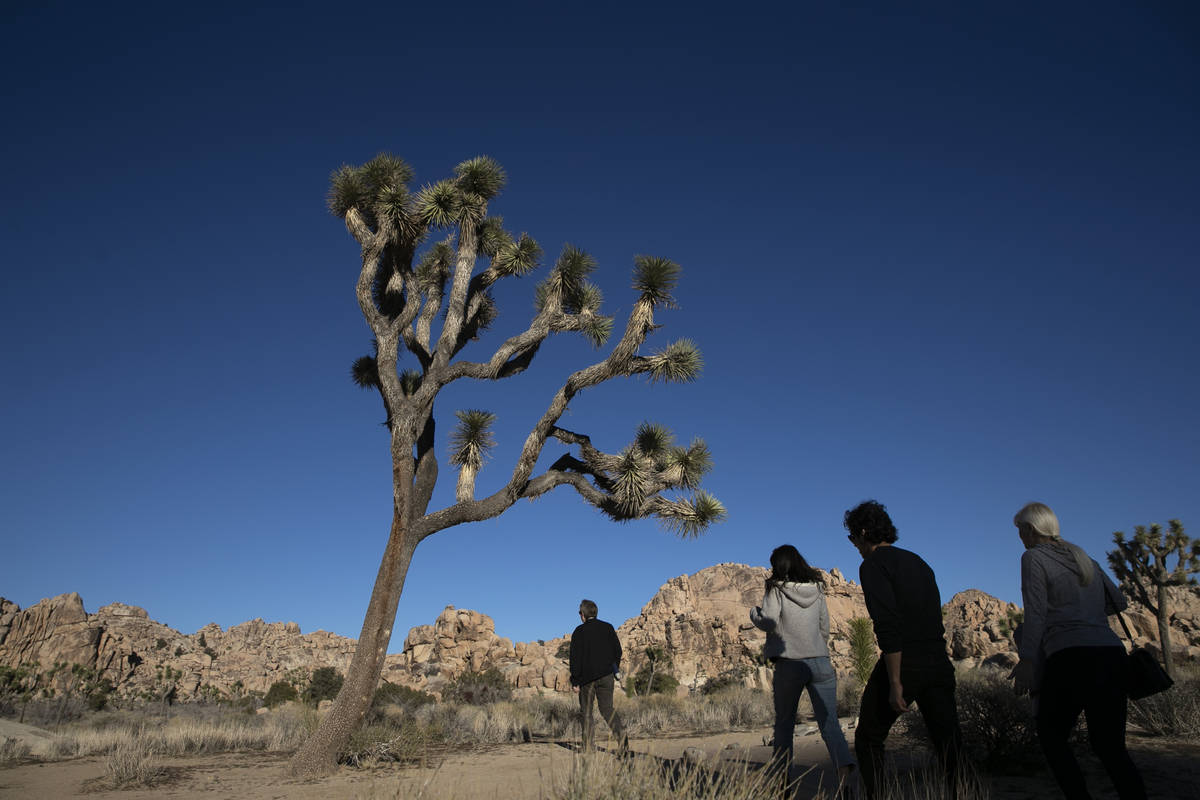 People visit Joshua Tree National Park in Southern California's Mojave Desert, Thursday, Jan. 1 ...