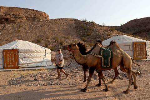 Rent a Mongolian ger at Camel Safari in Bunkerville, where visitors can interact with animals s ...