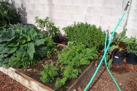 Carrots and most other root crops are usually not planted as transplants but planted directly i ...