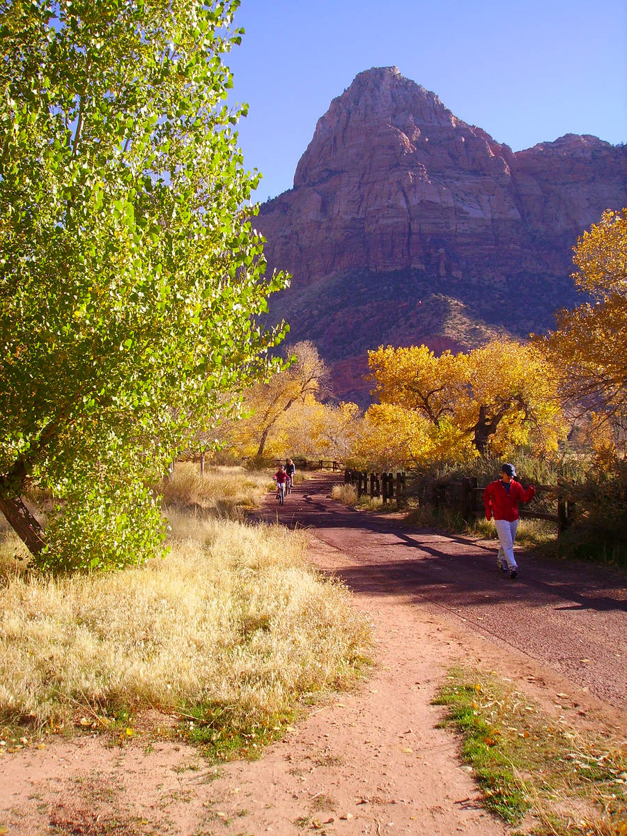 Peak foliage in the main area of Zion National Park usually runs from late October through earl ...