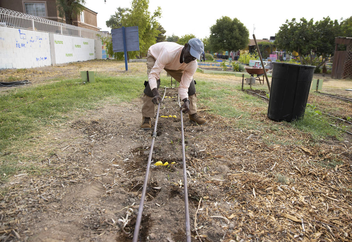 Gabriel Appenser, ground keeper at Vegas Roots, adjusts an irrigation system as he prepares the ...