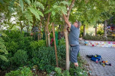Eddie Schmitz, a volunteer that restores and upkeeps the Las Vegas Healing Garden, carefully ta ...