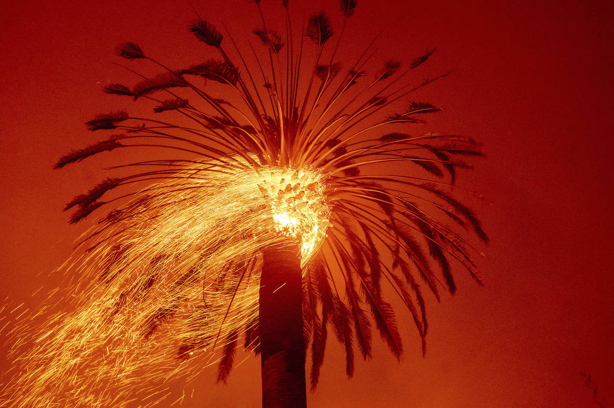 Embers fly from a tree as the Glass Fire burns in St. Helena, Calif., Sunday, Sept. 27, 2020. ( ...