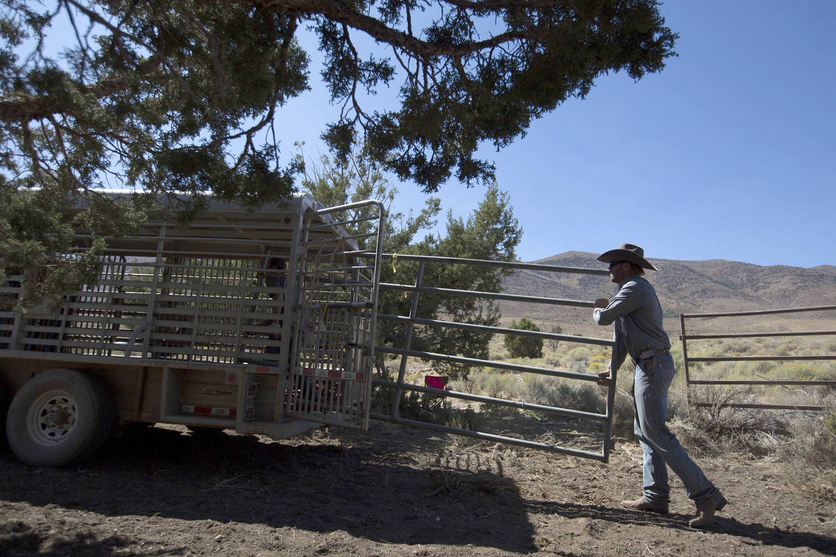 Wild Horse and Burro Specialist Ben Noyes loads the wild horse trap into a trailer during the D ...