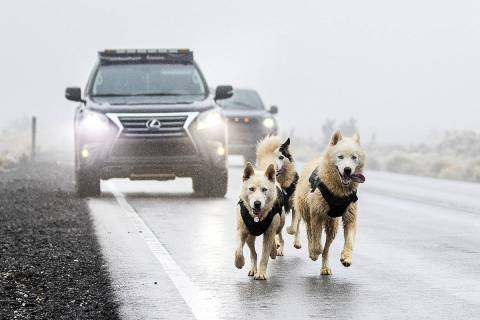 Vehicles driving west on State Route 156 try and dodge Siberian huskies Alaska, left, Princess ...