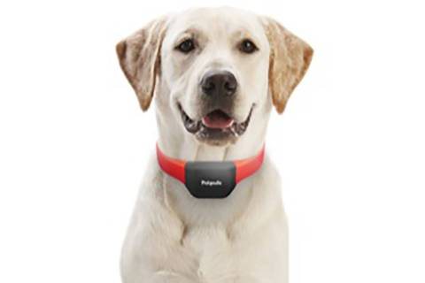 Petpuls' collar promises to tell you your dog's emotions (Petpuls)