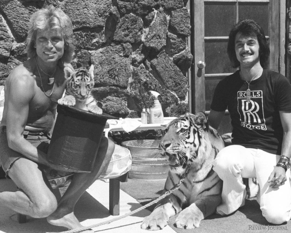 In this 1976 file photo, the three weeks old tigar Magic makes a public debut with Siegfried Fi ...