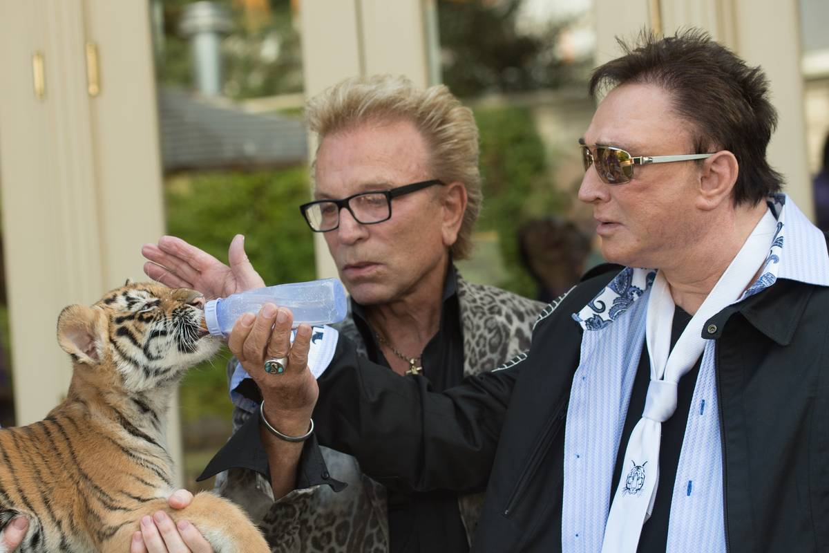 Siegfried & Roy make a special appearance in celebration of Siegfried & Roy's SARMOTI Cubs Day ...