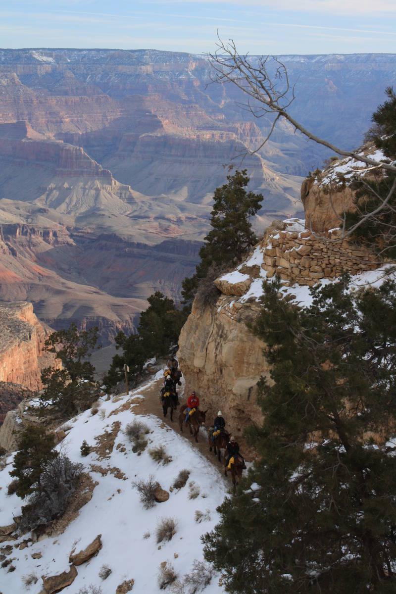 A mule train heads down the Bright Angel Trail. (Deborah Wall Las Vegas Review-Journal)