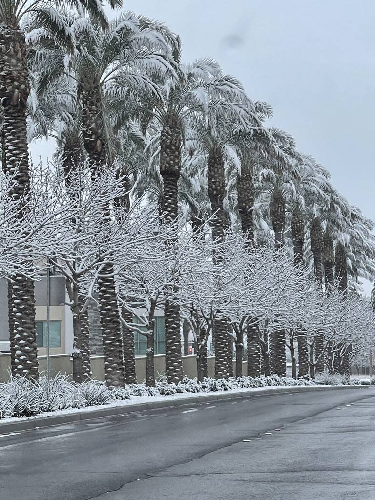 Snow covers trees are seen along Pavilion Center Drive in the Summerlin neighborhood early in t ...
