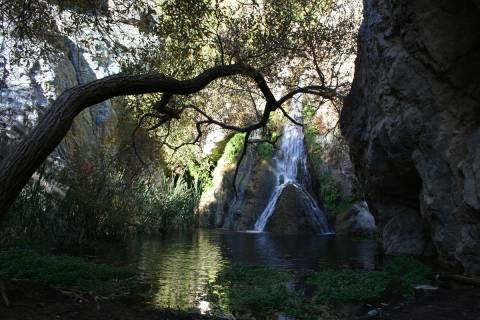 A canopy of tree branches shades the pool below Darwin Falls in Death Valley National Park, Cal ...