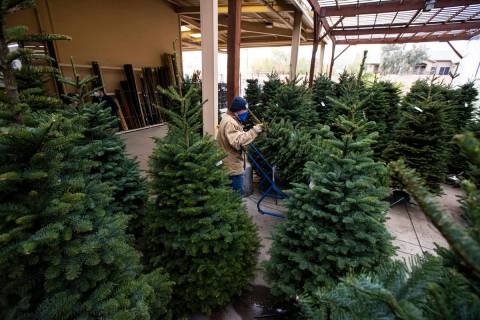 Brian Beeler, in outdoor sales at Star Nursery, moves a Christmas tree at Star Nursery in Las V ...