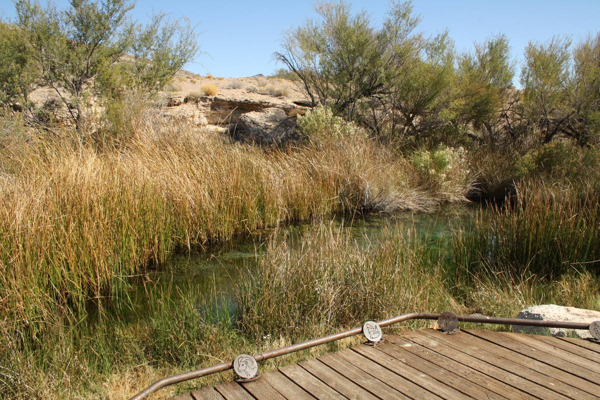 The King's Pool area at Point of Rocks is a great place to see wildlife and also to catch a g ...