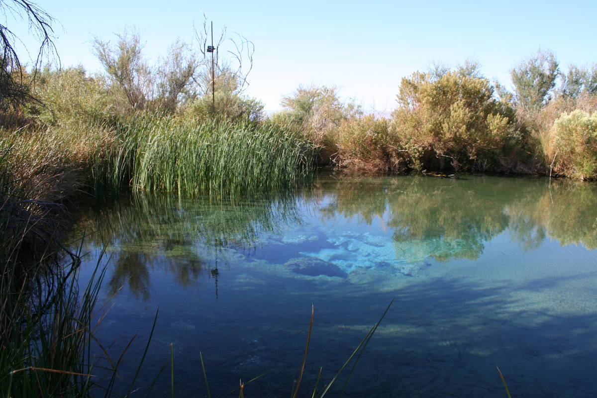 There are 30 seeps and springs at Ash Meadows including seven major springs. (Deborah Wall)