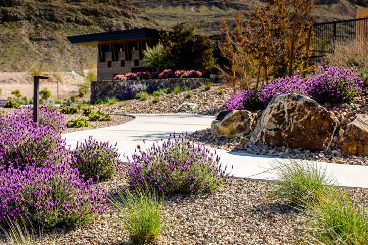 The Howard Hughes Corp. has long used low water-use plants in common area landscaping, includin ...