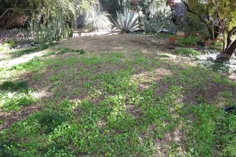 Annual weeds start from seed, germinate quickly, grow fast and cover as much area as possible a ...
