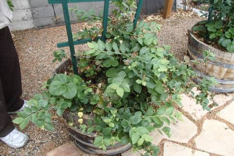 Flowerpot plants determine how often water is needed in a landscape if they are on the same val ...