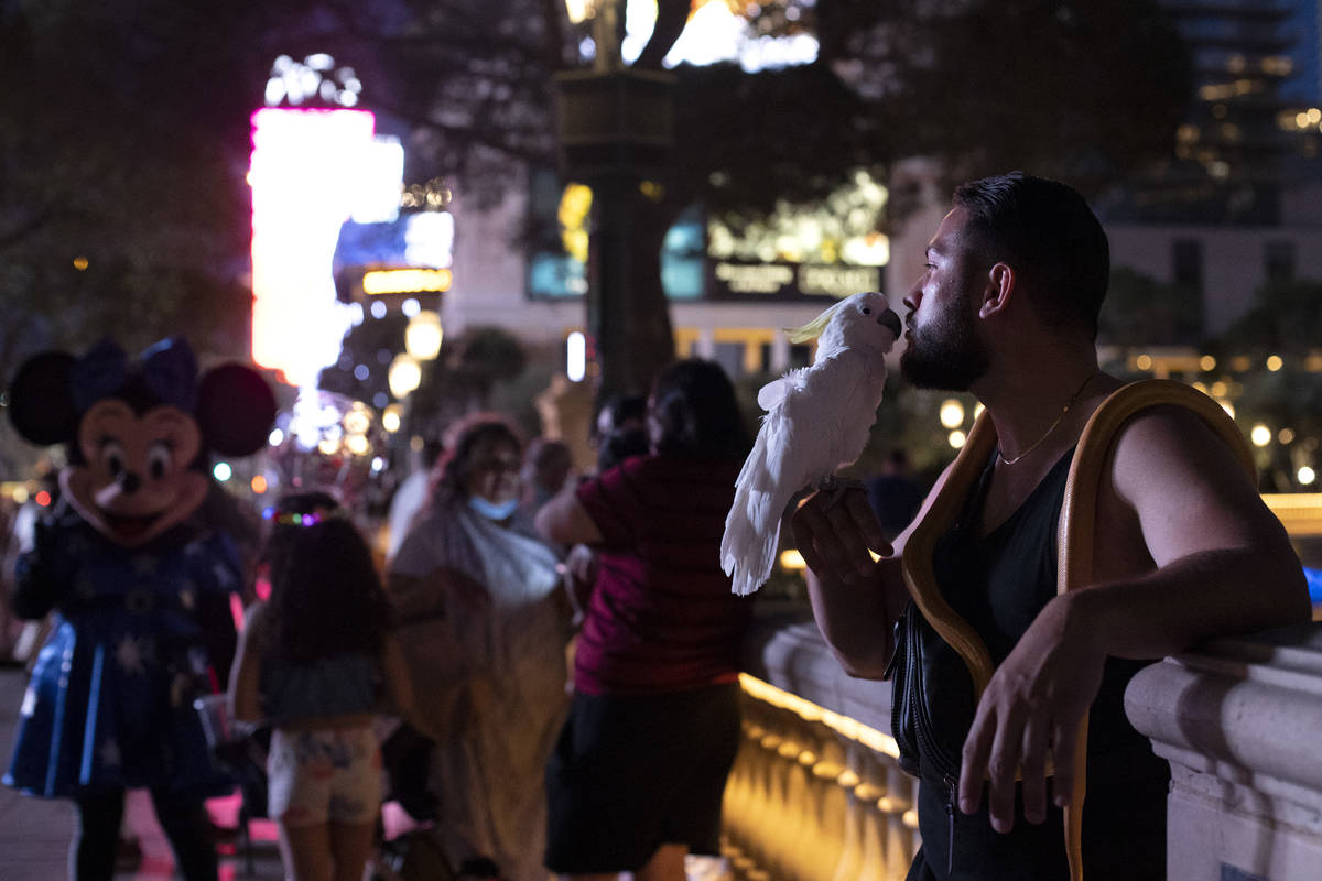 A busker who identified themselves as Ree kisses their bird Rio outside the Fountains of Bellag ...