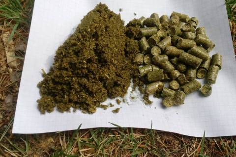 Alfalfa meal can be prepared from alfalfa pellets by soaking, crushing and drying them. (Bob Mo ...