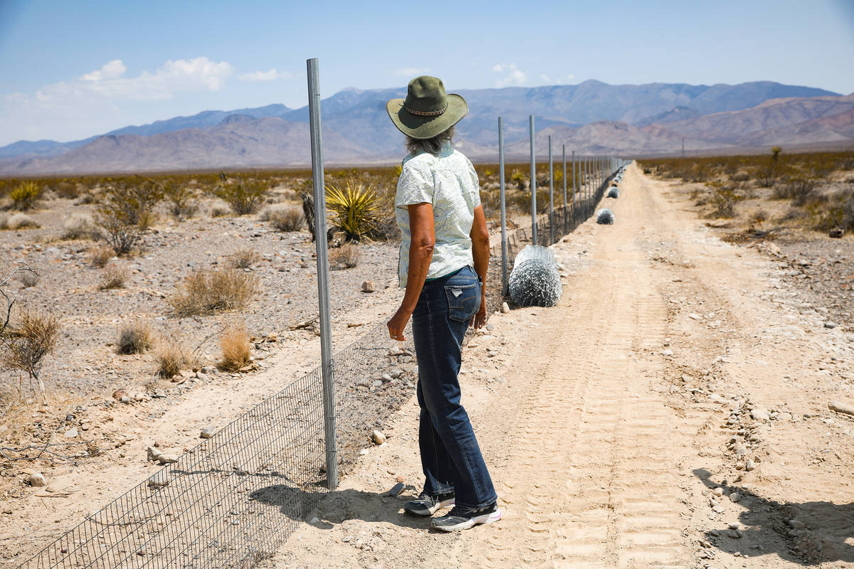 Laura Cunningham looks down the fence line of the future Yellow Pine solar project in the deser ...