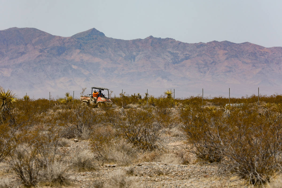 A crew works along the fence of the future Yellow Pine solar project that will cover a 3,000-ac ...