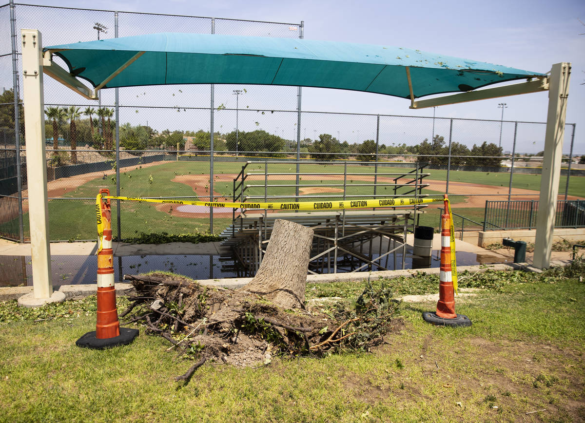 Tree stump is seen after a rainstorm at Arroyo Grande Sports Complex, on Friday, July 23, 2021, ...