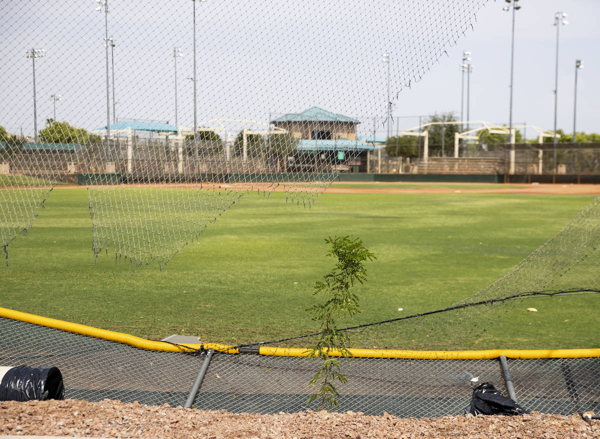 A fence damaged by fallen tree shown at Arroyo Grande Sports Complex after a rainstorm, on Frid ...