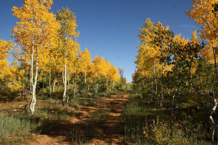 Most of the Markagunt Plateau is around 10,000 feet in elevation and is one of the first places ...