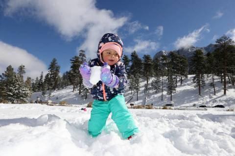 Ava Parker, 2, of Las Vegas plays in freshly fallen snow in Upper Lee Meadows on Mount Charlest ...
