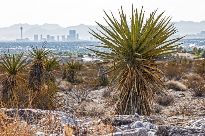 This Oct. 9, 2021, file photo shows the Las Vegas skyline from a vacant field in Las Vegas. On ...