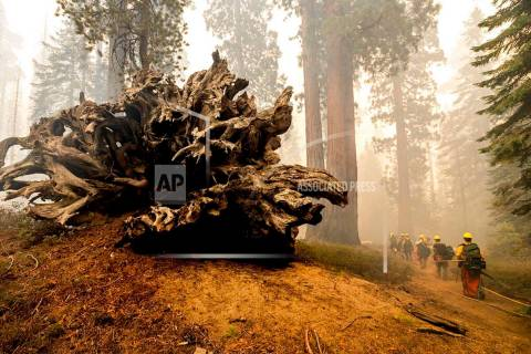 In this Sunday, Sept. 19, 2021, file photo, firefighters battle the Windy Fire as it burns in t ...
